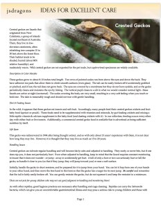 Crested gecko care-jsd